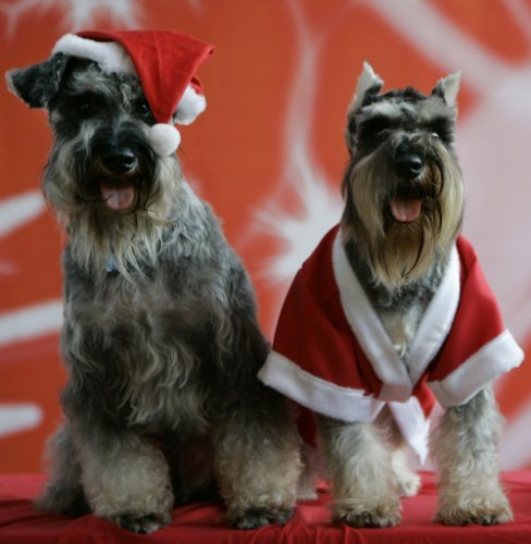 Photos Animals In Christmas Hats And Outfits The Daily Edge