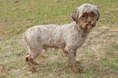 dog that looks like a man
