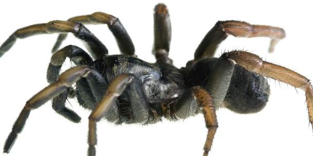 Quiz: How well do you know your venomous beasts? · TheJournal ie